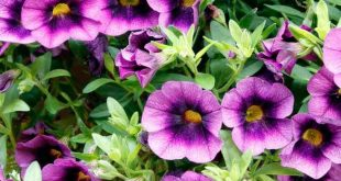 14 Long-Lasting Flowers for Your Yard