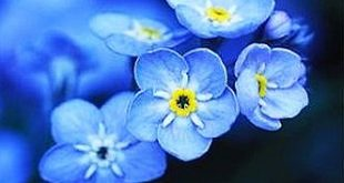 ~~Forget-me-not by David J. Gubernick~~