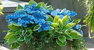 Einfache Container Gartenblumen Ideen (43)