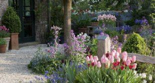 Zwiebelblumen in Tšpfen unter Zierkirsche (Tulipa 'Apricot Beaut