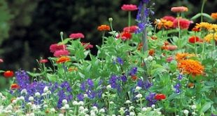 10 Garden Elements With Big Impact