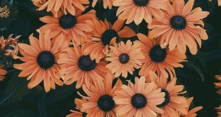 45 Beautiful flower iphone wallpaper ideas , Beautiful flowers iphone, wallpaper...
