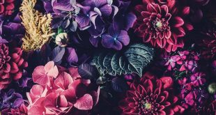 5 Floral iPhone Wallpapers To Celebrate 65k Pinterest Followers