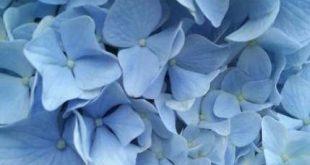 Flowers Aesthetic Pastel Blue 18 Trendy Ideas