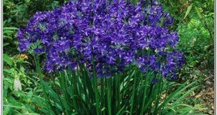 Gartenarbeit Tipps und Pflanzen