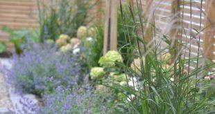 Hohes Gras auf der Rückseite, Nepeta (auch bekannt als Katzenminze / blaue Blü