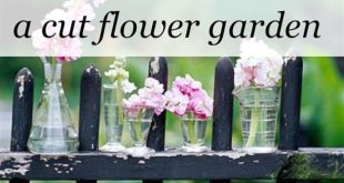 How To Grow A Cut Flower Garden