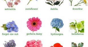 SUMMER FLOWERS – Namen der besten Hochzeitstrends der Summer Flowers 2017! . Ihre