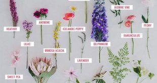 Seasonal Flower Guide: Spring