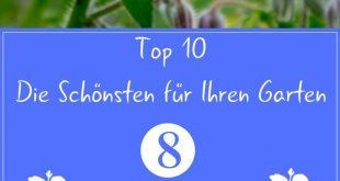 Sommerblumen: Die 10 Schönsten für Ihren Garten
