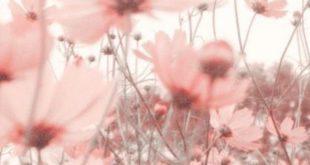 Sommerblumenwiese in pink   ChicChicFindings .... - Hintergrundbilder - #ChicC...