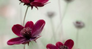The blur, depth of field, subtle palette, even the flowers…perfect for my styl...